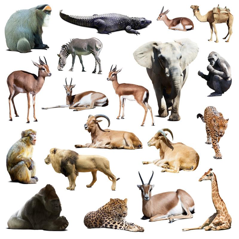 19种野生动物高清图片