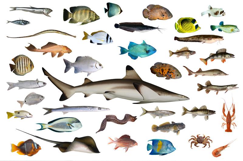 40种海洋鱼类高清图片
