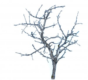 "3""-4"" Miniature Sagebrush Tree"