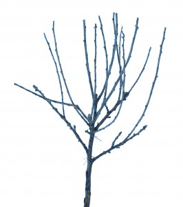 "1""-2"" Miniature Trees"