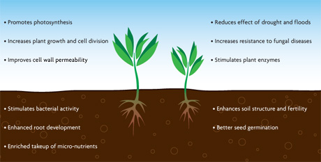 Humic Substances and how they help fertilisers work