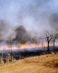 field burning in tropics