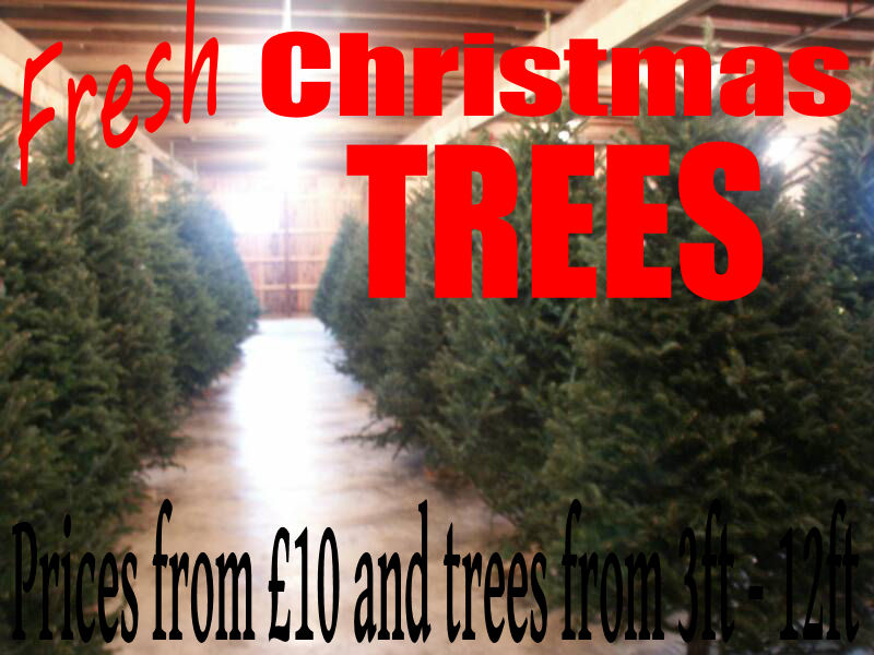 real christmas tree pontefract
