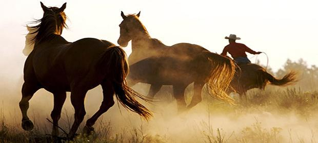 This is a photograph of horses.