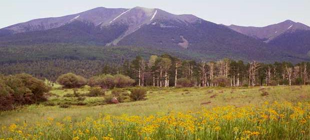 Image of Mt. Humphrey in spring