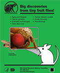 Graphic of mouse and drosophila head
