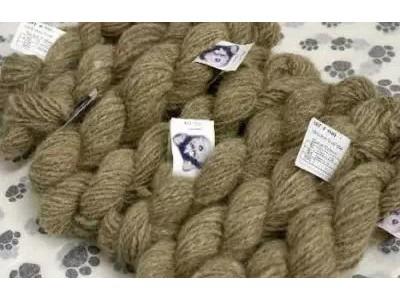 狗毛编织的毛衣将取代羊毛