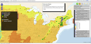 Map of Mountain Maple (Acer spicatum) occurrences, showing that it grows in areas that stay cool in summer.