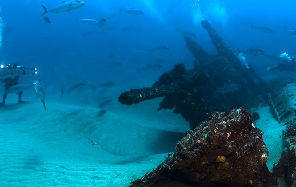 photo of diver and fish and shipwreck