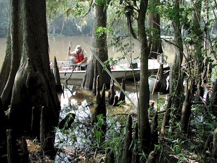 Picture of USGS employee in a Louisiana swamp.