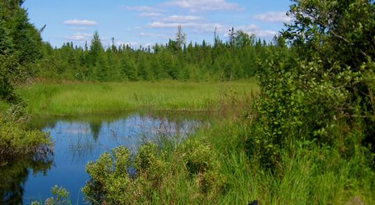 McCollum Celebrates Victory To Protect Minnesota's Boundary Waters feature image