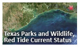 Click or touch to go to the Texas Parks and Wildlife Red Tide Current Status