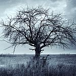 A dead tree in the middle of a field.