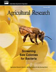 """Cover of Agricultual Research Magazine for February 2015 - featuring a photo of a bee.  The lead story is, """"Screening Bee Colonies for Bacteriat."""""""