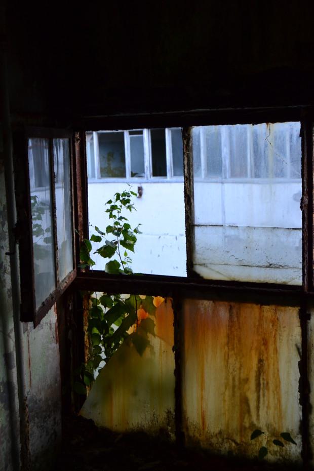 Интересная композиция, дерево которое прорастает в окне.