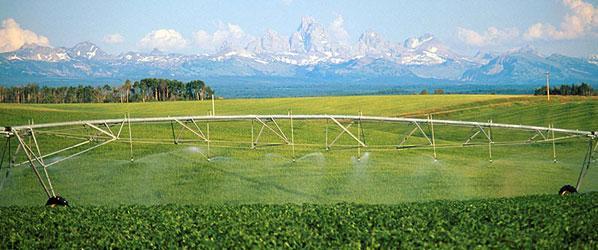 photo of field irrigation