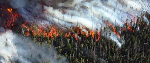Wildfire at Yellowstone National Park