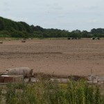 So many pig farms in Norfolk. They look so happy in the Summer .