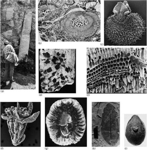 fossil specimens illustrating various parts of plants and modes of preservation