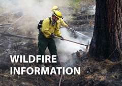 Fire Information - Photo of wildland firefighters
