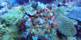 Underwater photo of a coral reef