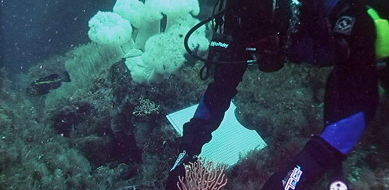 Study Pinpoints How Slowly Some AK Corals Grow