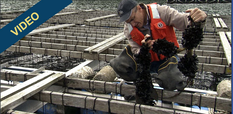 Meet Bill Dewey, Shellfish Farmer