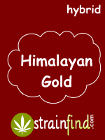 HYBRIDhimilayangold