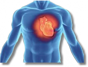 Cardiac Diagnostic Services