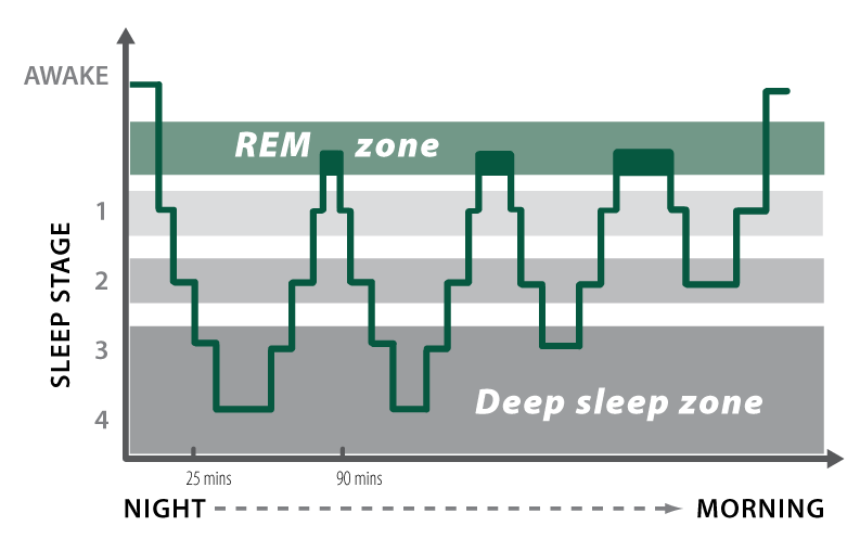 Figure 1_normal sleep pattern