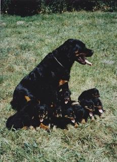 Dollieen Pups2