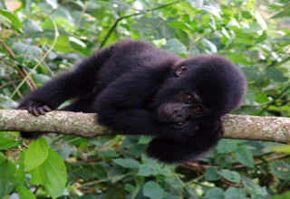uganda wildlife and chimpanzee trekking