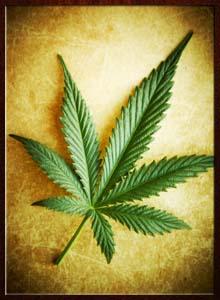pot smoking laws