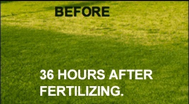 Lawn Fertilization Services in McLendon-Chisolm TX