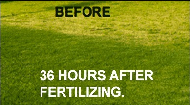 Lawn Fertilization Services in Heath TX