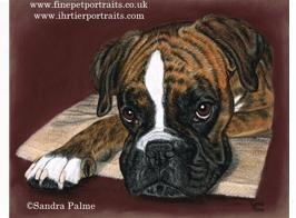 Boxer Dog pastel portrait