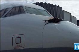秃鹫悲剧!撞上高速飞机:血腥横尸