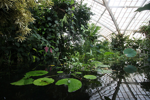 Inside the Conservatory of Flowers, Golden Gate Park