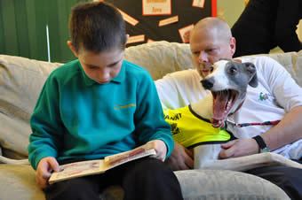 Danny, a greyhound in the UK, is a therapy reading & listening dog.