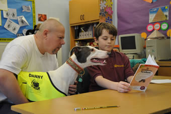 Danny, a greyhound therapy dog, reading education assistance dog, in the UK.