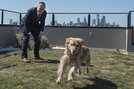 Josh Winigrad lets his golden retriever mix, Daisy, out for a run in the rooftop dog park, one of the amenities that lured Winigrad to the IceHouse Community in Fishtown.