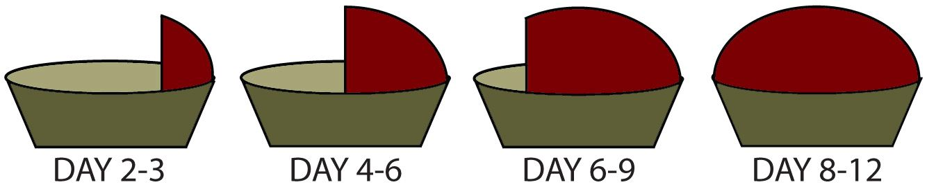 Transitioning graph v4