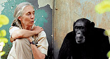 Jane Goodall sits with a chimpanzee at Gombe National Park in Tanzania.