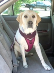 dog-harness-seat-belt