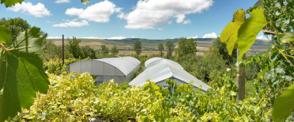 Greenhouses provide new opportunities for farmers along the Administrative Boundary Line with South Ossetia
