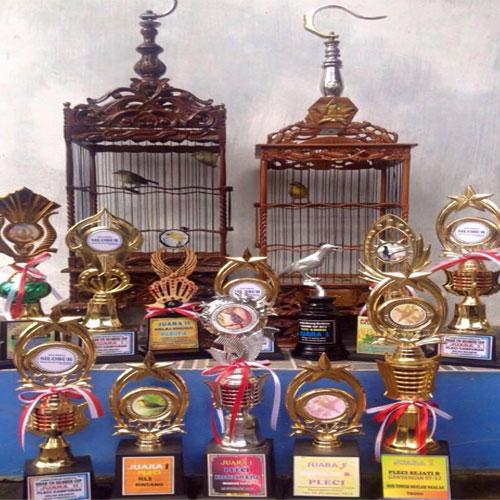 Pleci Juara, Pleci Juara Nasional, Mulai Dari Hobi Menjadi Hoki Memelihara Burung Pleci