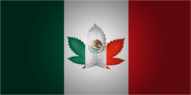 Mexicos president may be full hero Join The 2017 Global Marijuana March Weekend Around The World