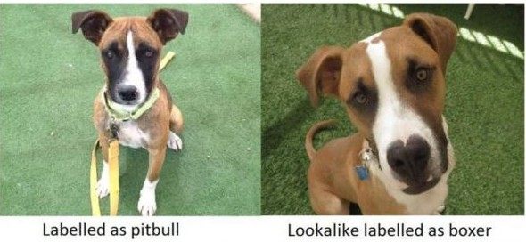pitbull and boxer but they'ere the same dog