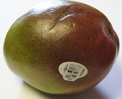 Mango is conventionally grown
