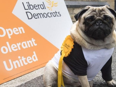 Lib Dem campaign goes to the dogs: Five things we learned from election campaign